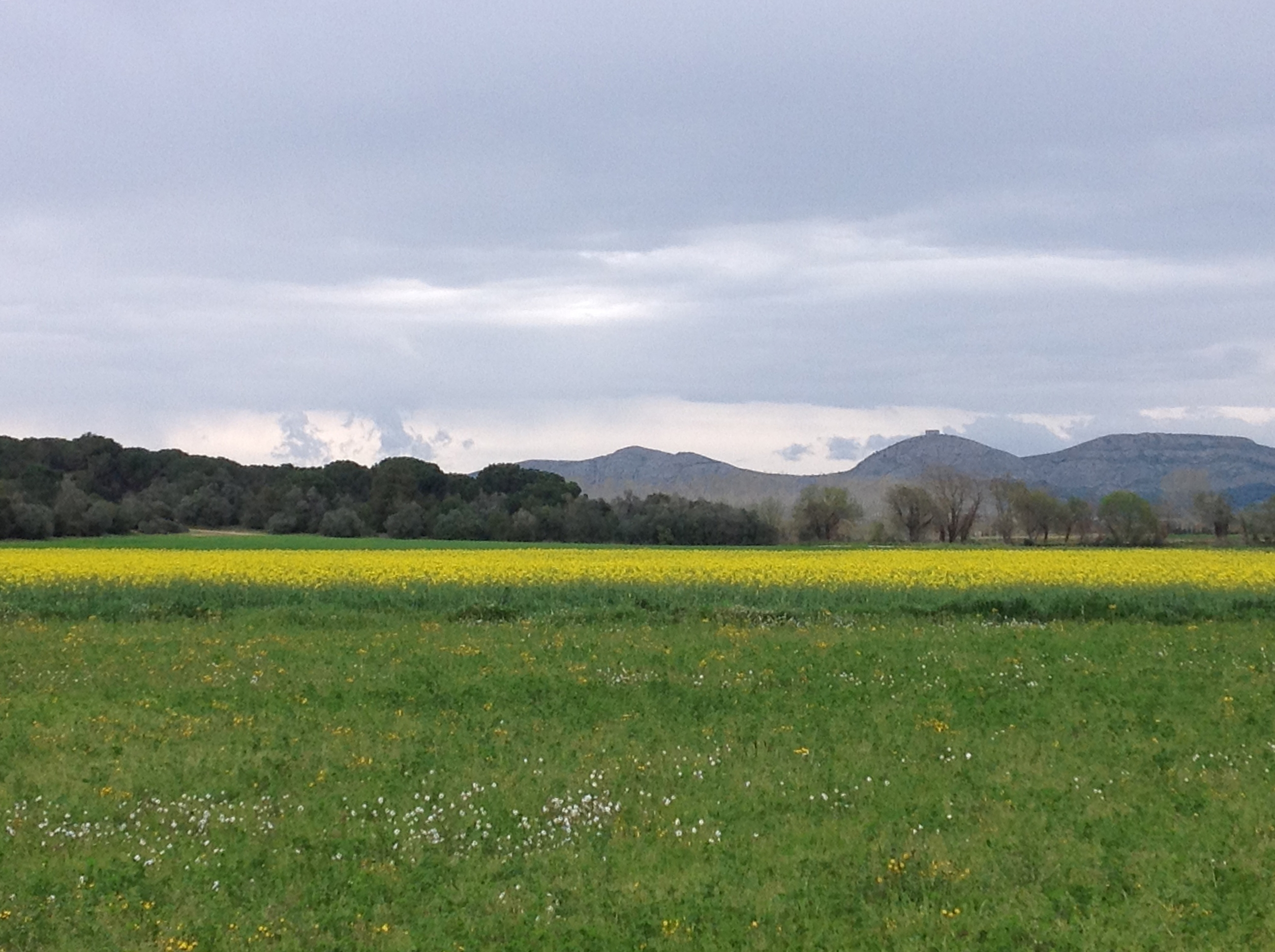 Vistas de campos de Bellcaire d´Empordà